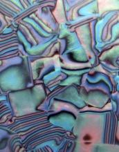 Celuloid abalone 1,5 mm výložka